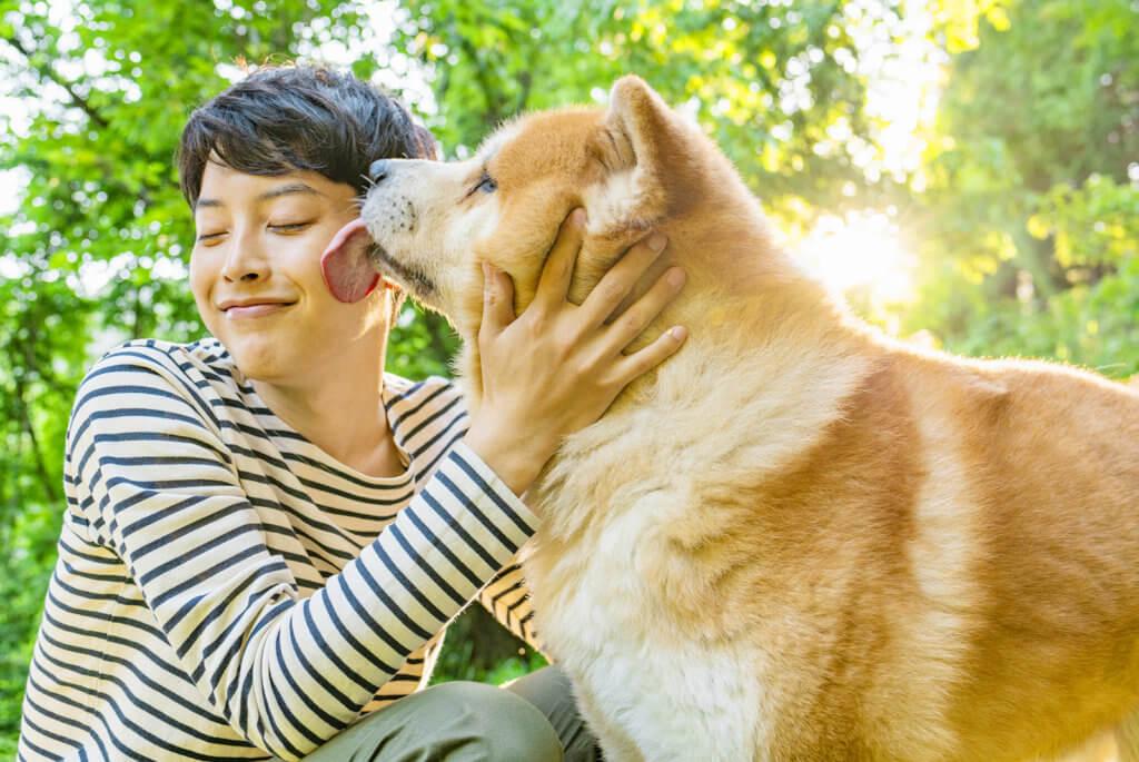 飼い主を舐める秋田犬