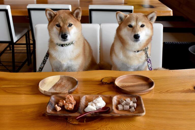 二匹の柴犬とドッグフード