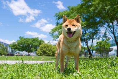 日本犬の飼い方