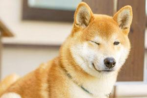 日本犬の特徴