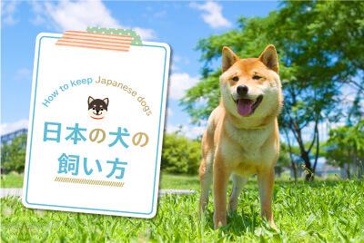 日本の犬の飼い方