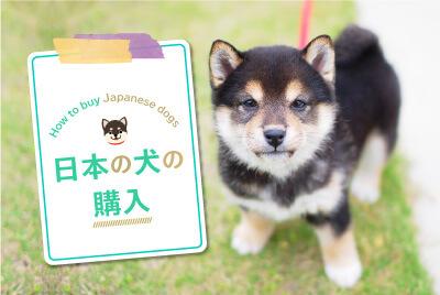 日本の犬の購入