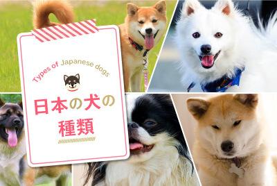 日本の犬の種類